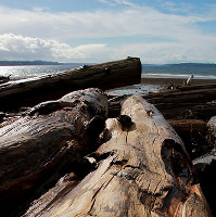 Image: 'Down Log'
